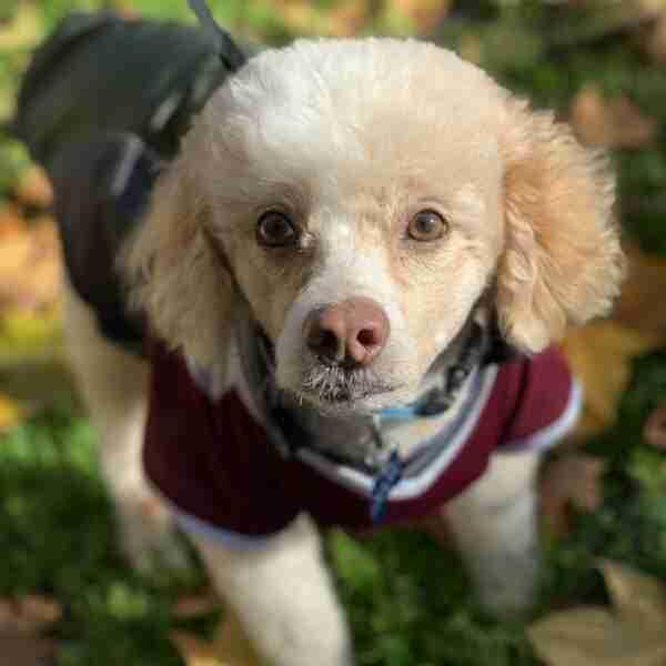 mision espiritual de los perros