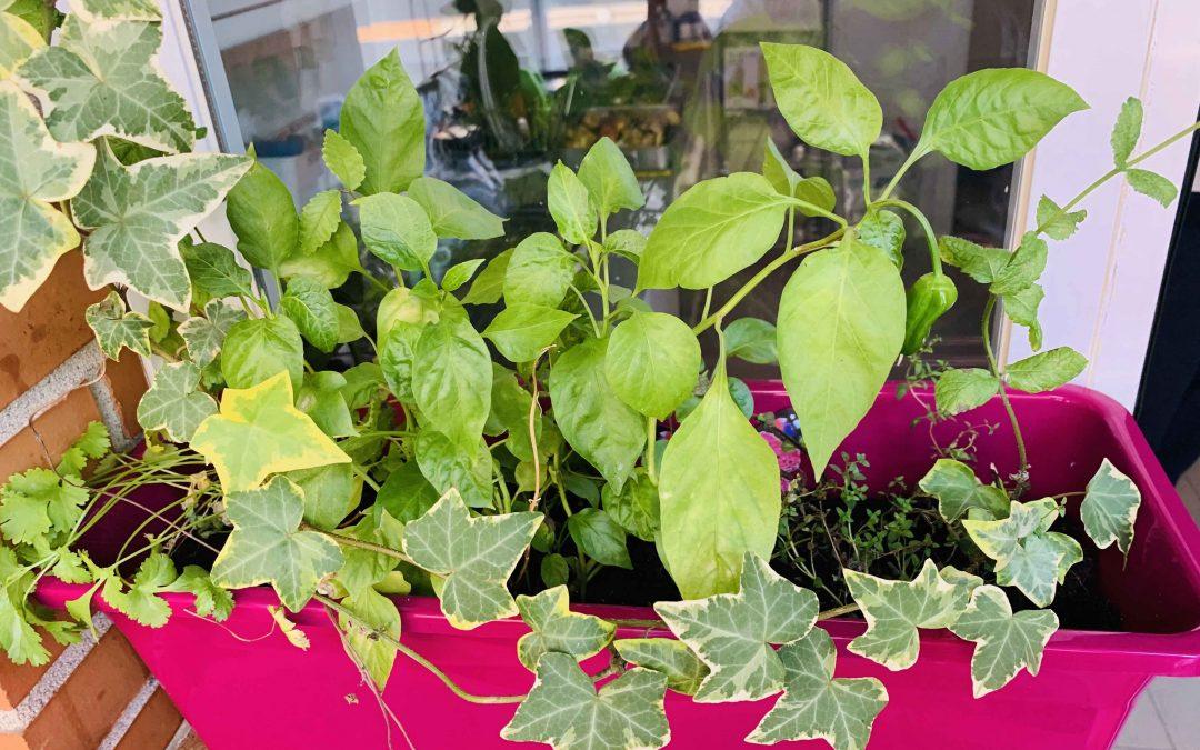 Las 8 plantas que debes tener en tu hogar
