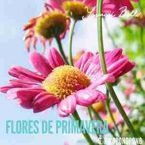 flores de primavera hooponopono