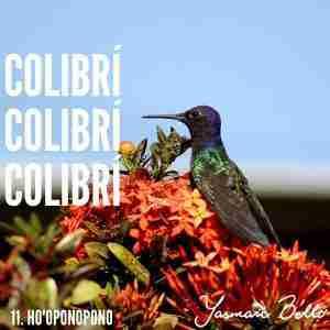 hooponopono frases gatillo colibri