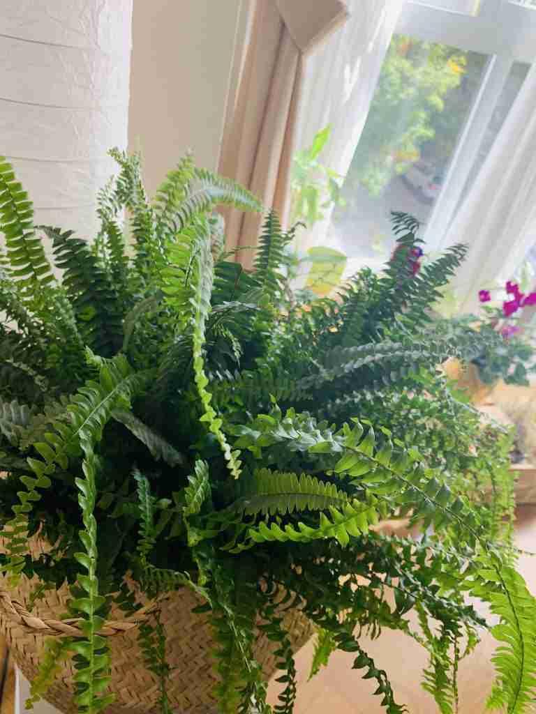 8 plantas que debes tener en tu hogar