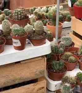 plantas que no debes tener en casa