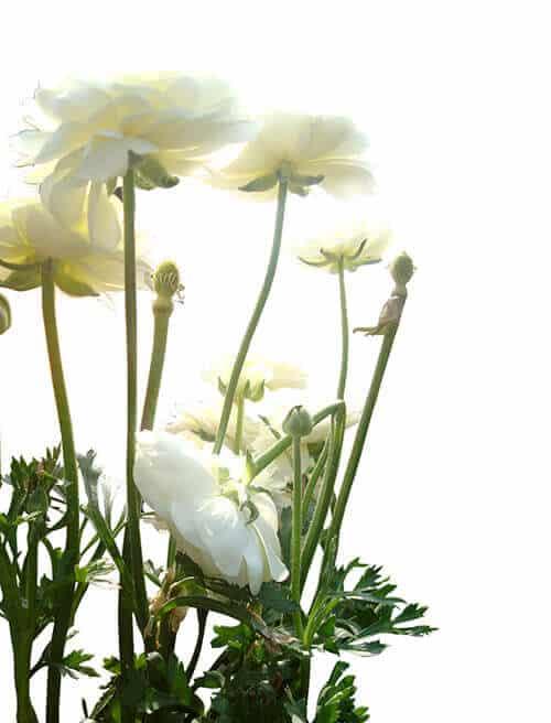 las-flores-tambien-cambian-y-eso-no-las-hace-feas